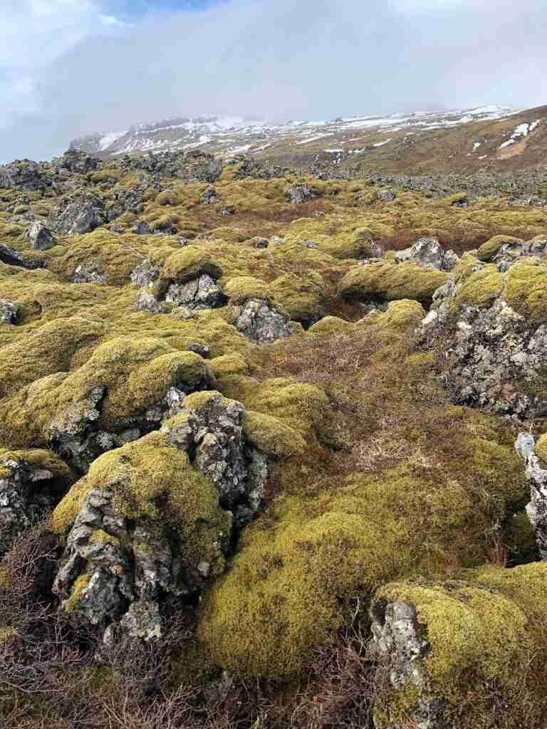 mossy lava field in iceland